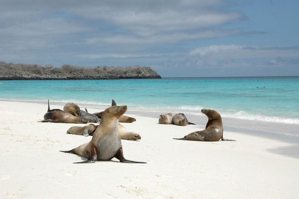 Залив Гарднера - Галапагосские острова, Испания