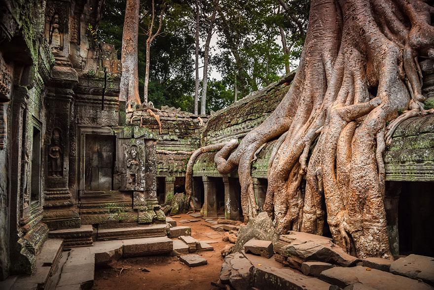 как фото замков в индии проросших деревьями архитектурный