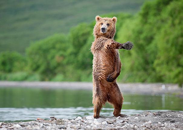 Секси медведи