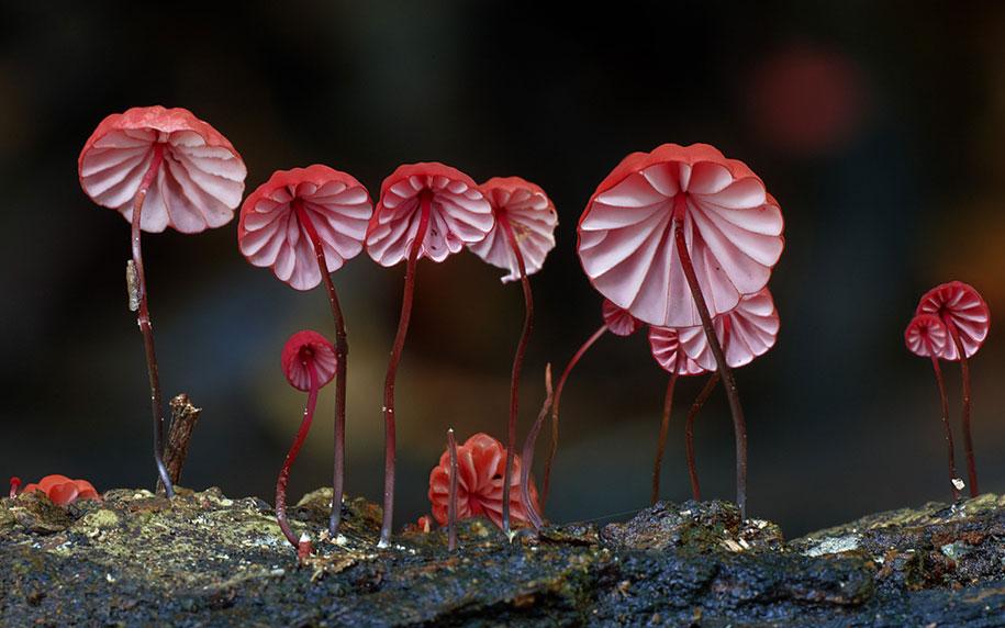Волшебный мир редких грибов. Фотограф Стив Эксфорд