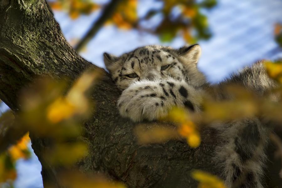 Осень, от которой мы в восторге - 30 фотографий с животными