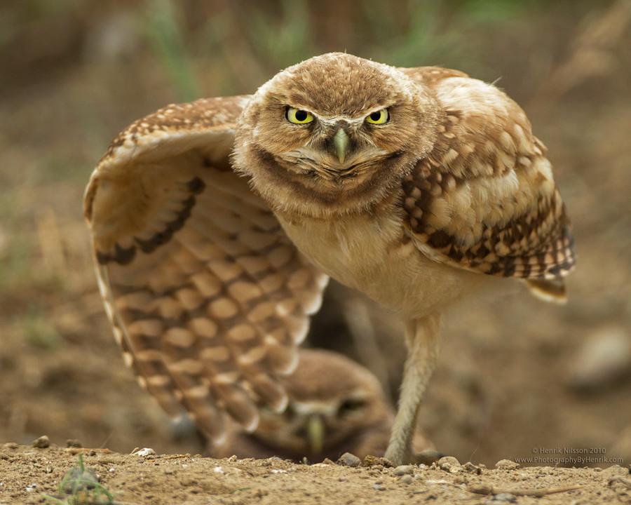 нуждались картинка сердитая сова чтобы
