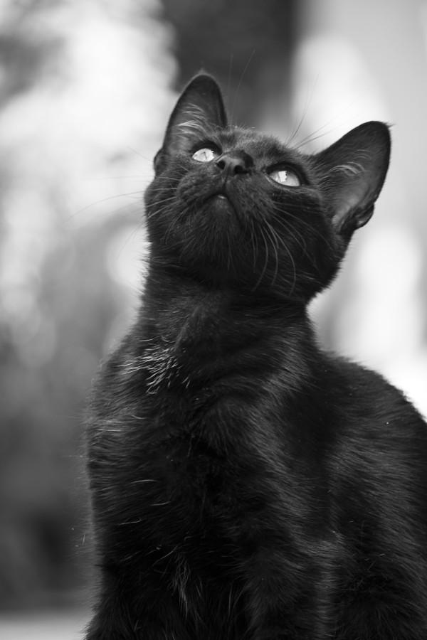 загадочные картинки черных кошек