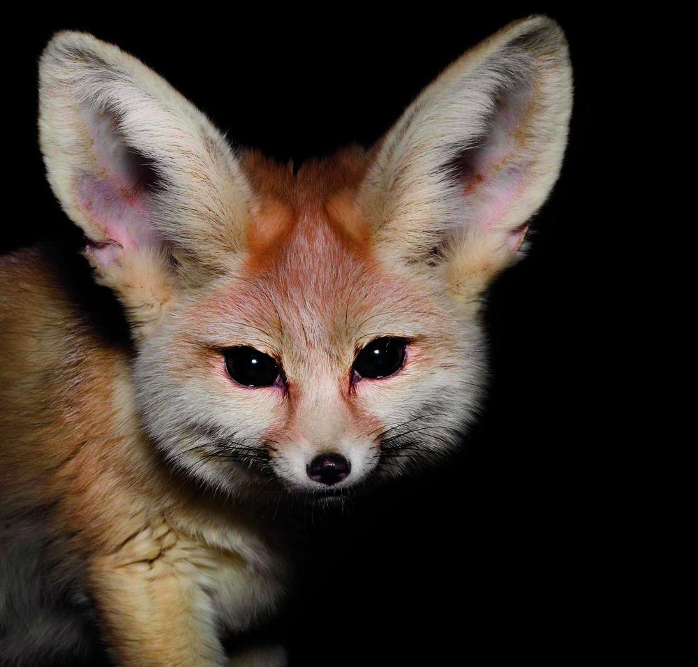 Животные ведущие ночной образ жизни доклад 309
