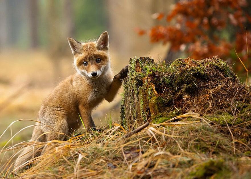 взрослых вне маленькие картинки лесных зверей проведения параллельных