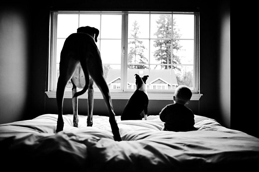 Когда собаки большие, а дети маленькие - 44 потрясающие фотографии - 13