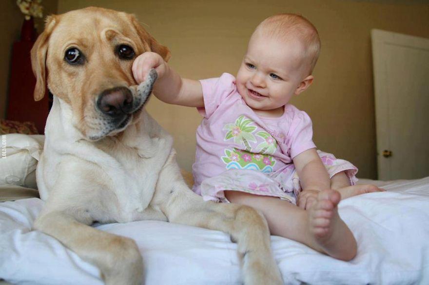 Когда собаки большие, а дети маленькие - 44 потрясающие фотографии - 16