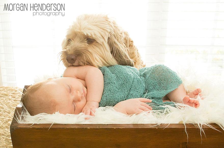 Когда собаки большие, а дети маленькие - 44 потрясающие фотографии - 24