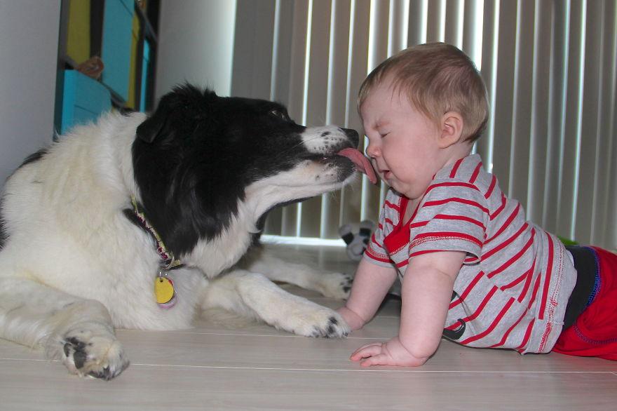 Когда собаки большие, а дети маленькие - 44 потрясающие фотографии - 32