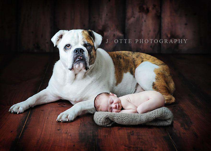 Когда собаки большие, а дети маленькие - 44 потрясающие фотографии - 36