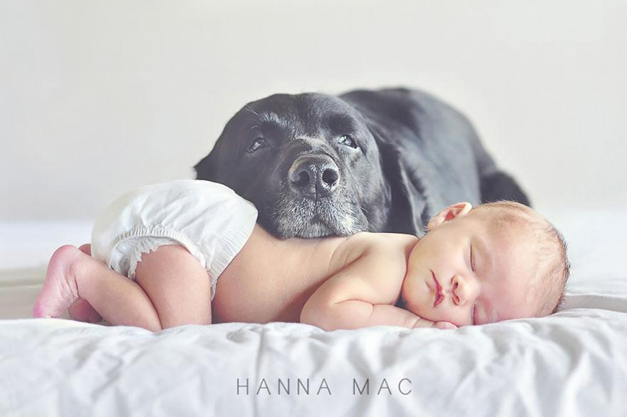 Когда собаки большие, а дети маленькие - 44 потрясающие фотографии - 4
