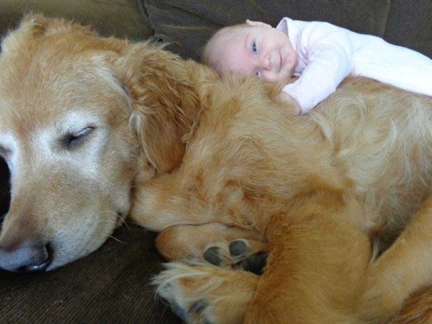 Когда собаки большие, а дети маленькие - 44 потрясающие фотографии - 8