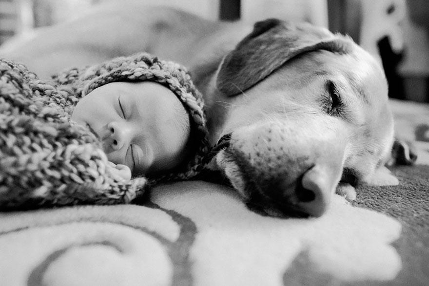 Когда собаки большие, а дети маленькие - 44 потрясающие фотографии - 9