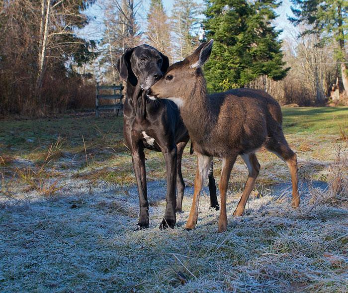 Собака и оленёнок