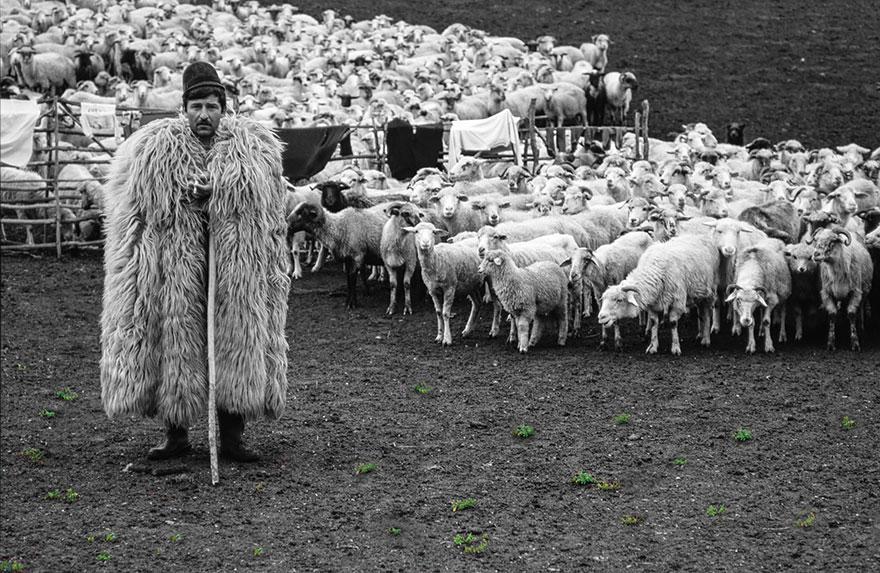 Чабан с овцами картинки