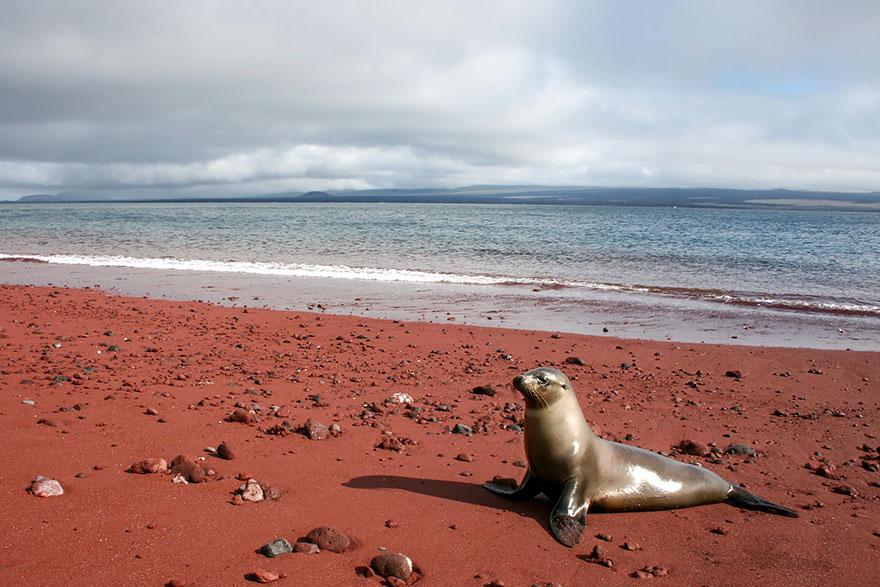 17 самых необычных пляжей со всего мира-10-1