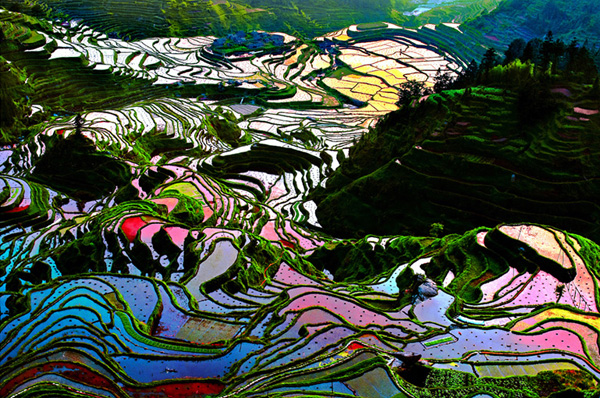 12-Rice-Terraces-Yunnan-China