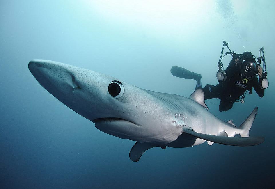 Картинки акул приколы