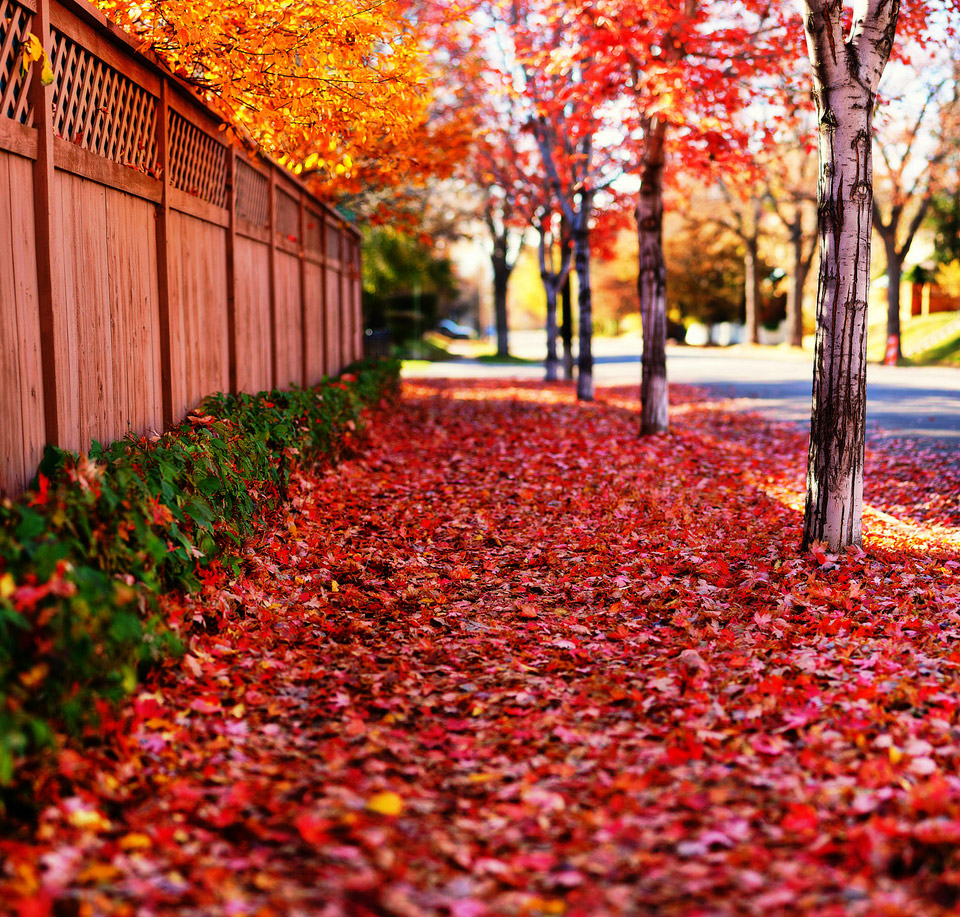 red-path-of-autumn