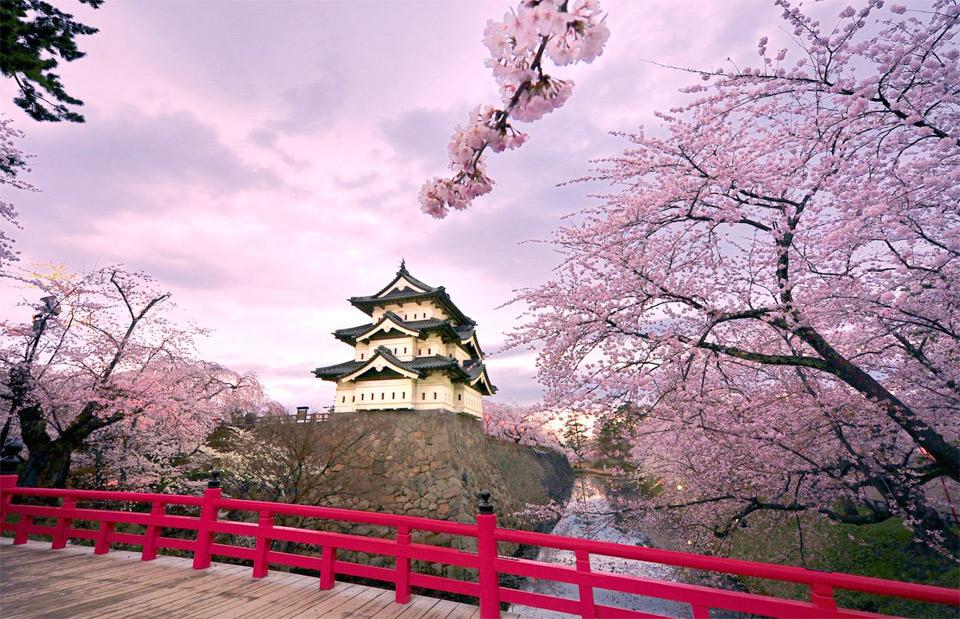 cherry-blossoms-hirosaki-castle-japan