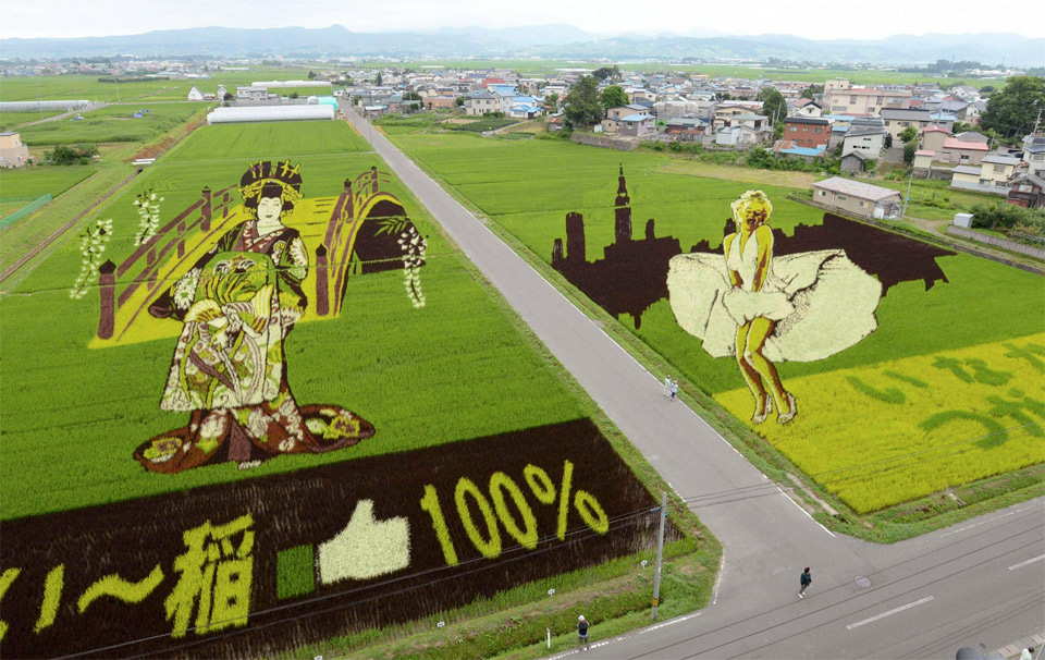 rice-field-art-japan