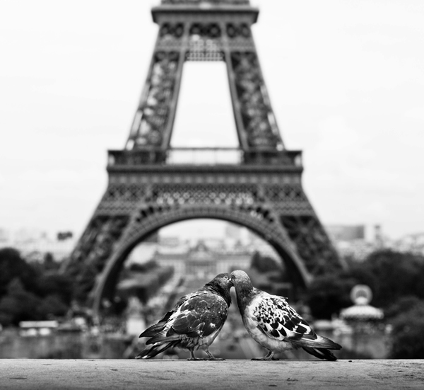 eiffel tower photography 17