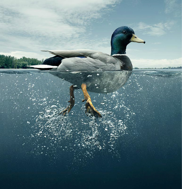 photo manipulations 04