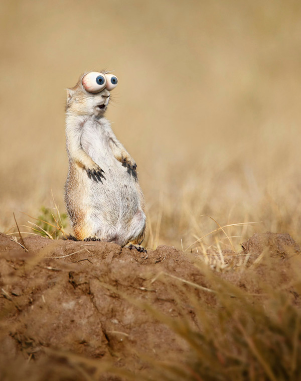 photo manipulations 07