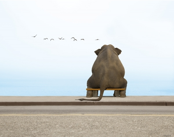 photo manipulations 39