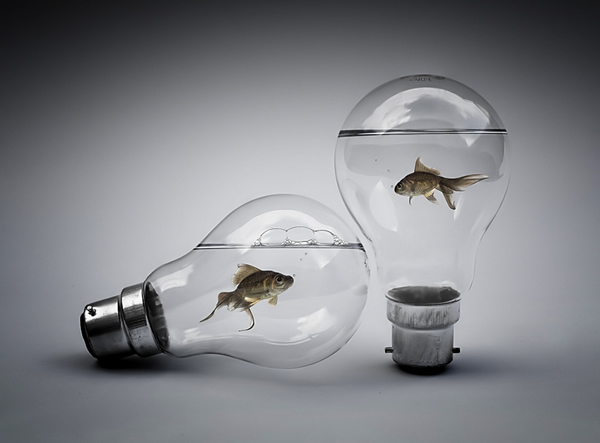 photo manipulations 49