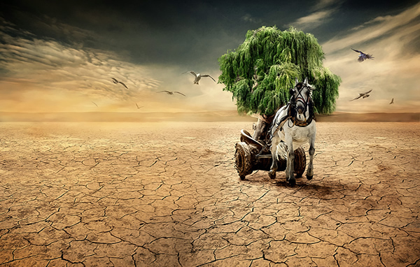 photo manipulations 59