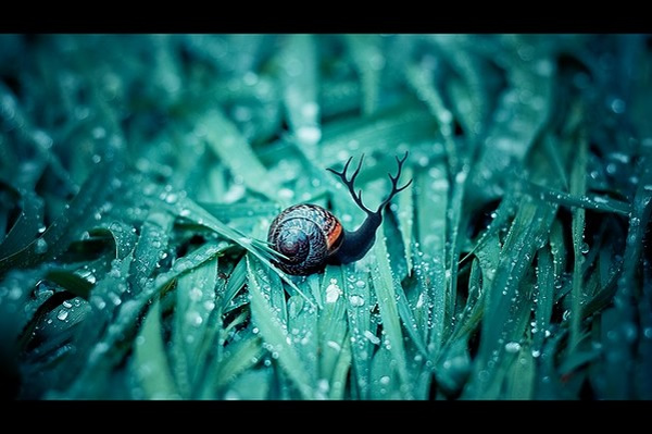 photo manipulations 63