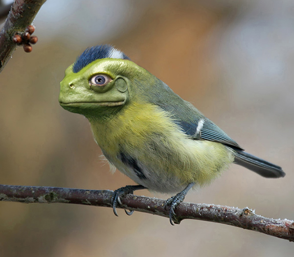 photo manipulations 66