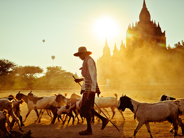 bagan-myanmar-goat-herd 55766 600x450