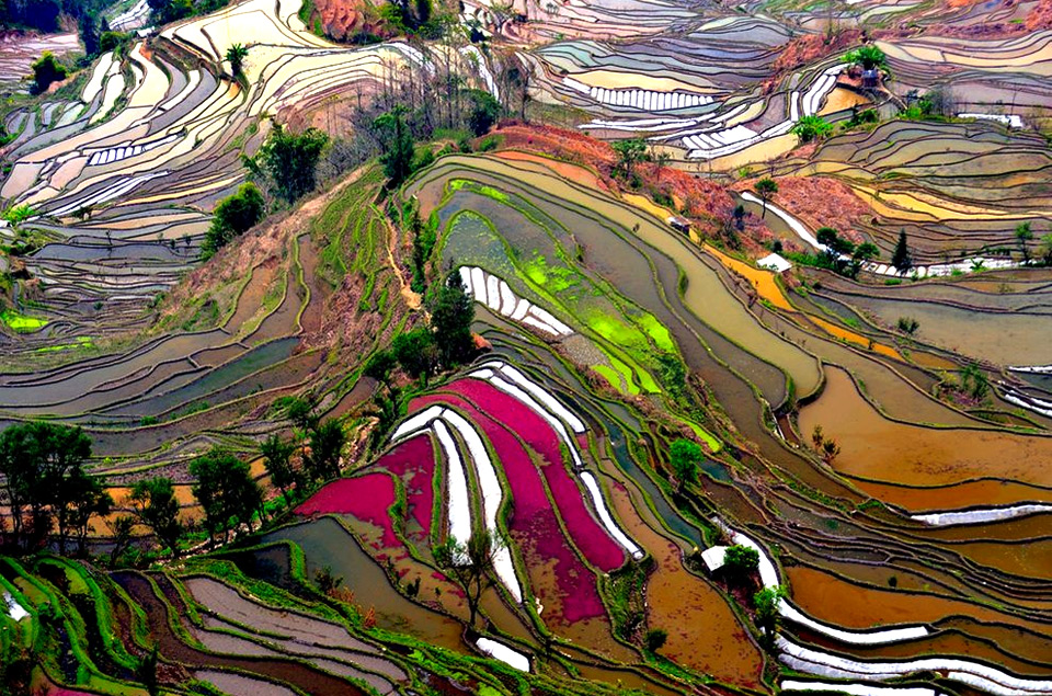 12colorful-rice-fields-of-china