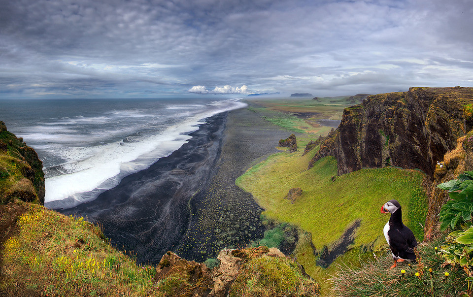 27iceland-land-of-the-puffins