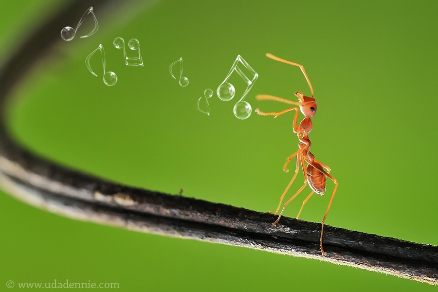 Amazing Insect Photography by Uda Dennie