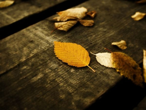 autumn_wallpapers_7