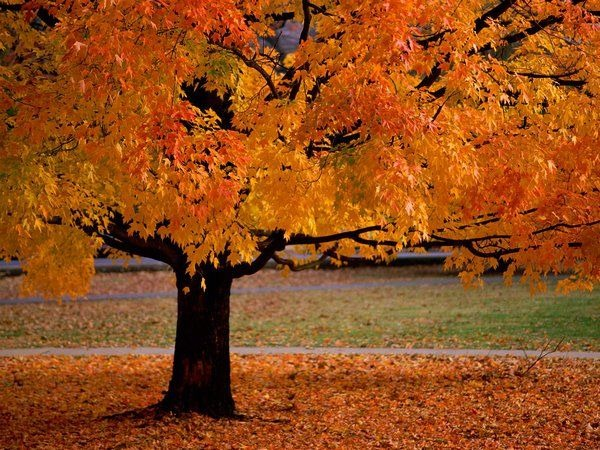 autumn_wallpapers_2