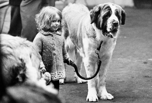 «Дай, Джим, на счастье лапу мне»: фотографии Ширли Бейкер с выставок собак 1960-70-х