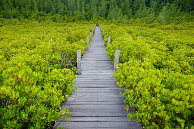 Все оттенки зелёного: 31 фотография для вдохновения