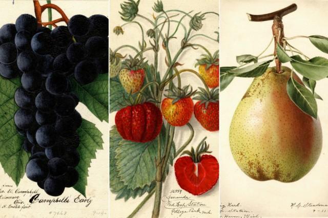 7500 фруктовых акварелей в высоком разрешении бесплатно