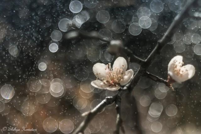 20 самых популярных фотографий природы на 500px в этом году