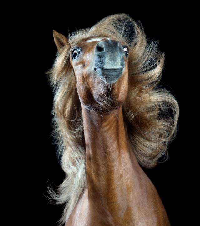 «Лошадиный стиль». Фотограф Вибке Хаас