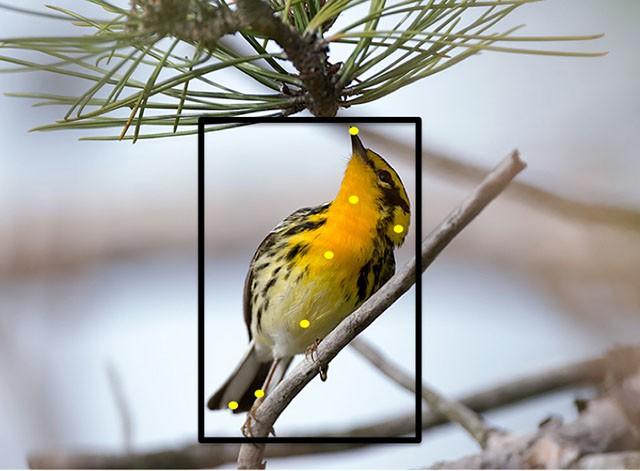 сайт про птиц