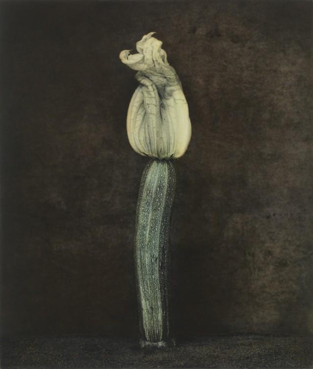 Как изящен кабачок! Удивительные натюрморты Ингара Краусса