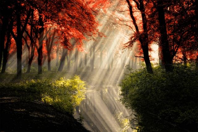Красивые цвета осени в фотографиях