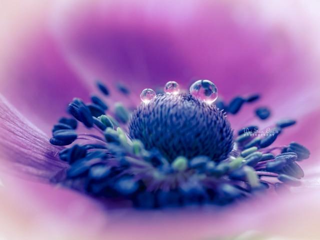 Очаровательные и вдохновляющие цветочные фотографии Вэй-Сан Уи