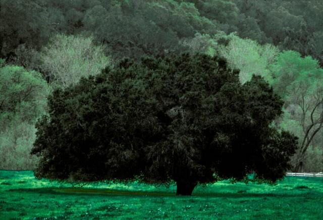 «Портреты деревьев» Франка Хорвата
