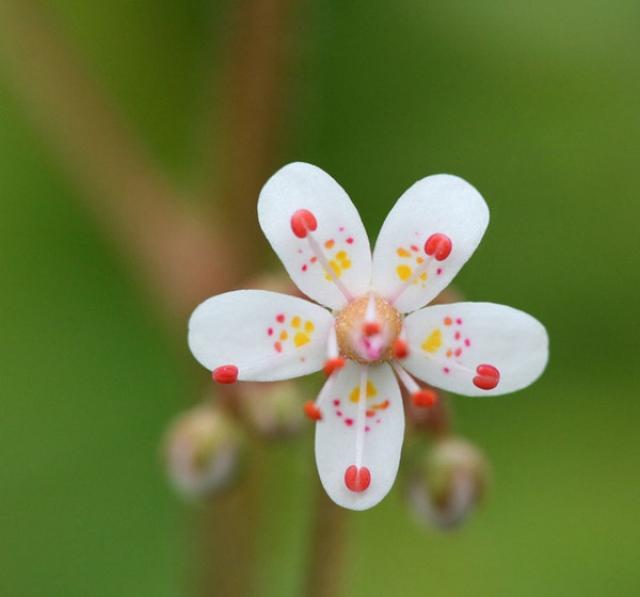 Маленькие картинки цветы
